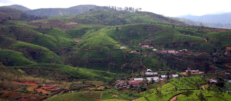 Чайные плантации Нану-Ойа, Димбула, Шри-Ланка
