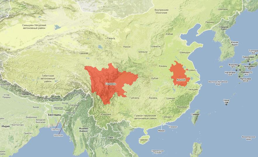 Провинции Сычуань и Аньхой специализируются на производстве желтого чая