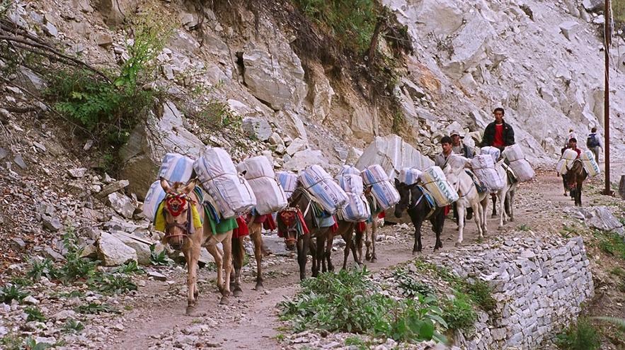 Перевозка чая - чайный караван
