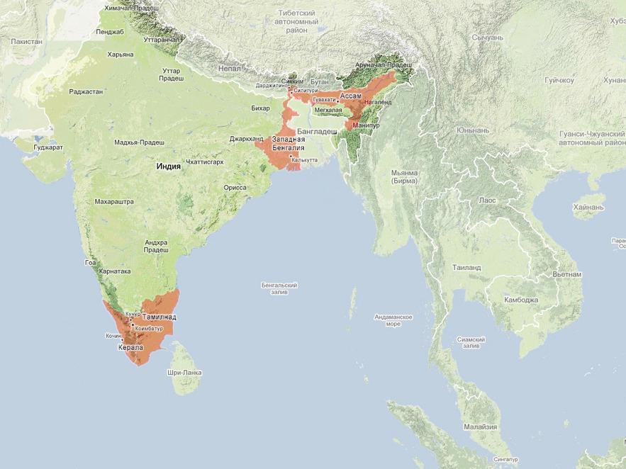 Чаепроизводящие регионы Индии: Ассам, Дарджилинг, Керала, Тамилнад