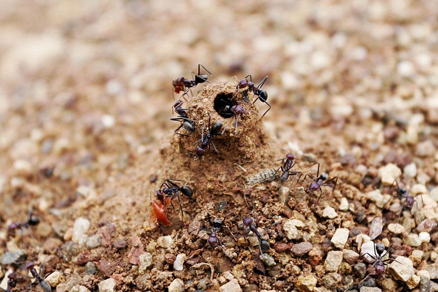 Вход в муравьиное гнездо