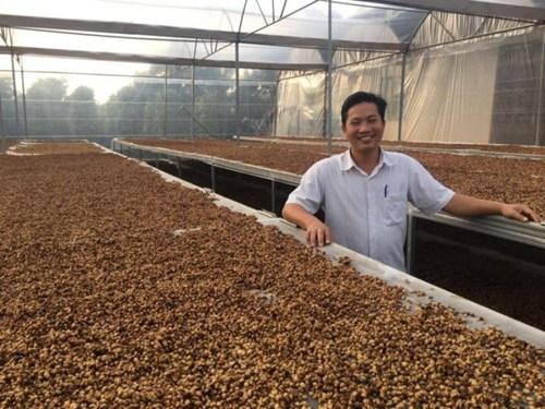 Вьетнамский кофе - сушка на африканских кроватях